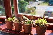 Plantes aromatiques au bord d'une fenêtre