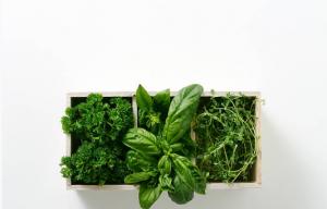 Association de plusieurs plantes aromatiques dans un pot